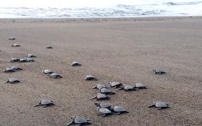 Chocó Turtles