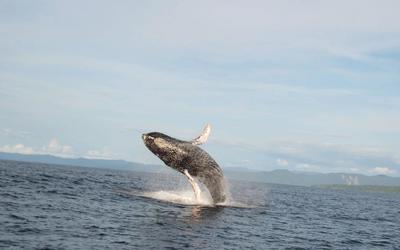 Chocó Whales