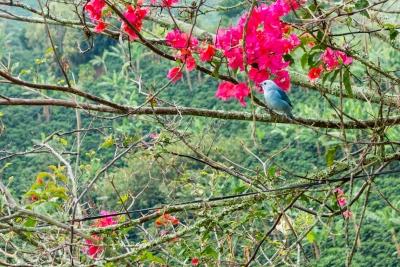 Coffee Region, Nature