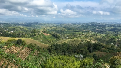 Coffee Region Landscape