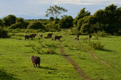 Los Llanos Safari