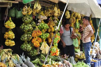 Amazone, Fruits