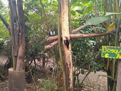 Bioparque La Reserva, Besuch 2019