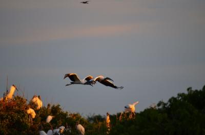Los Llanos, Safari, Birds