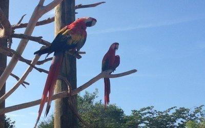 Cartagena, Baru, Aviario
